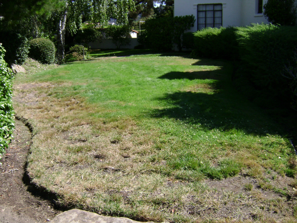 Healthy green lawns require dethatching