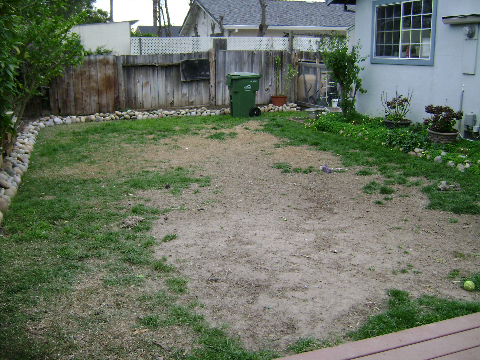 Real grass dead spots with dogs