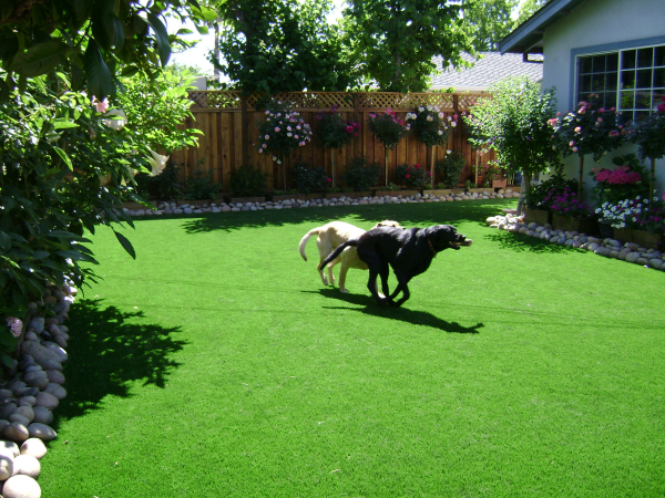 Artificial grass means a green lawn, even with dohs
