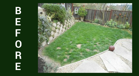 natural grass lawn before