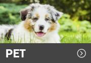 PET-icon