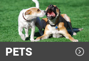 dogs playing on an artificial turf