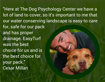 Cesar Milan image and quote about using artificial turf