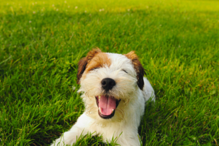 artificial grass with a happy dog