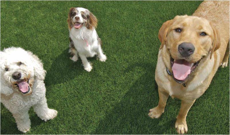 Dogs_Webshot.jpg