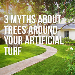 Myths About Trees Around Your Artificial Turf http://www.heavenlygreens.com/blog/myths-about-trees-around-artificial-turf @heavenlygreens