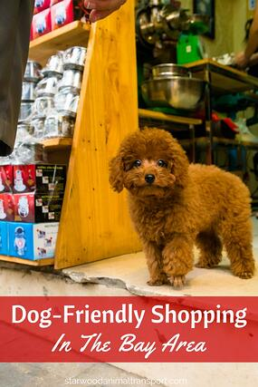 Dog Friendly Shopping In The Bay Area