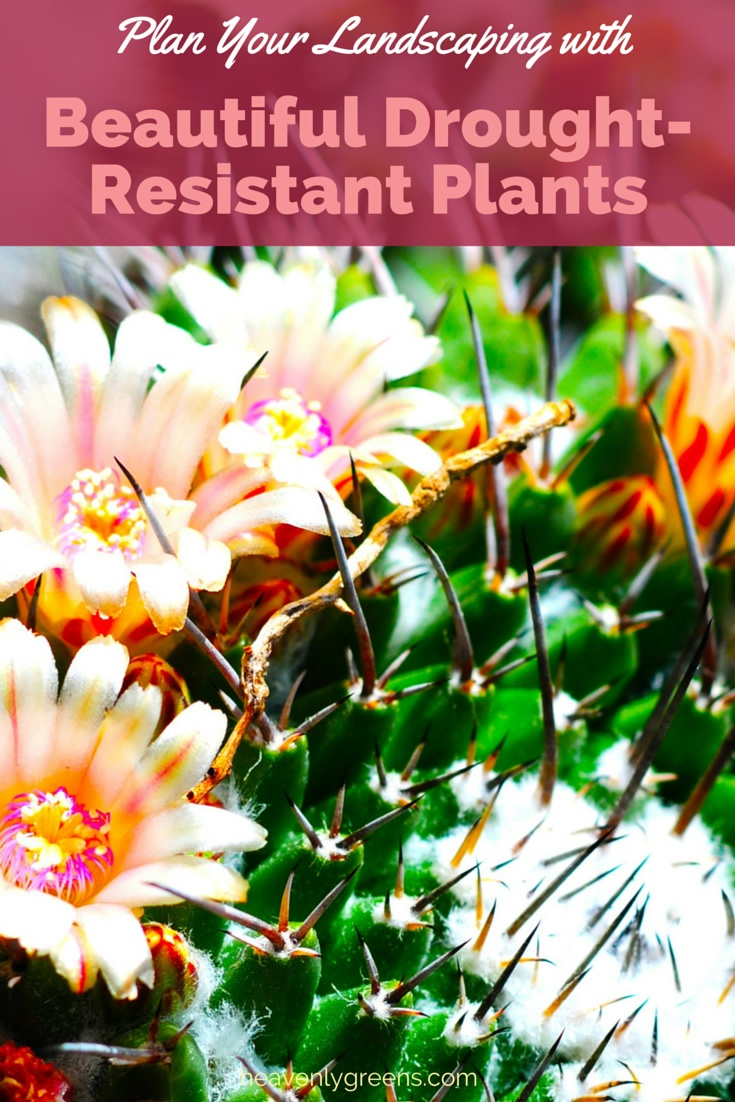 Drought-Resistant Plants for Landscaping http://www.heavenlygreens.com/blog/drought-resistant-plants-for-landscaping @heavenlygreens