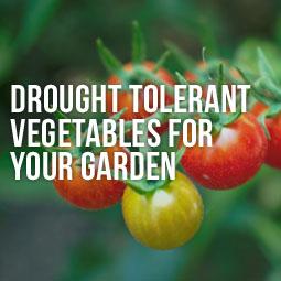 Drought-Tolerant-Veggies-Garden-Blog
