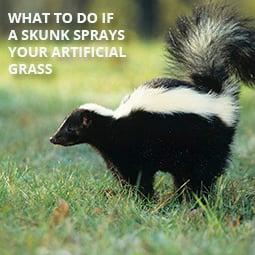 HG-skunk-grass-blog