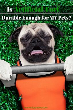 Is Artificial Turf Durable Enough for MY Pets? http://www.heavenlygreens.com/blog/is-artificial-turf-durable-enough-for-my-pets @heavenlygreens