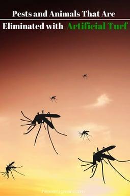 Pests & Animals that are eliminated with Artificial Turf http://www.heavenlygreens.com/blog/blog/-temporary-slug-767e595b-47df-4a37-bf00-4fbda3f853aa @heavenlygreens
