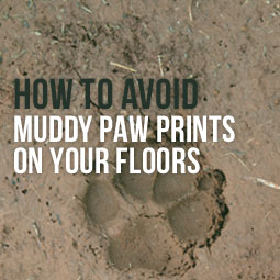 How To Avoid Muddy Paw Prints On Your Floors http://www.heavenlygreens.com/blog/how-to-avoid-muddy-paw-prints-on-your-floors @heavenlygreens