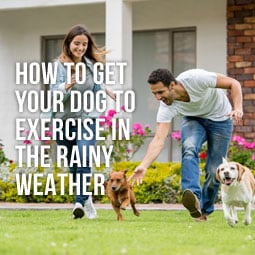 How To Get Your Dog Exercise In The Rainy Weather http://www.heavenlygreens.com/how-to-get-your-dog-exercise-in-the-rainy-weather @heavenlygreens