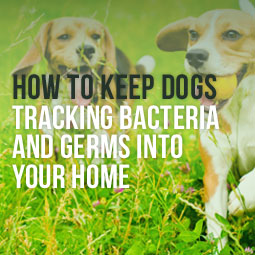 dogs playing on the grass and some tips on how to keep them from tracking bacteria and germs into your home