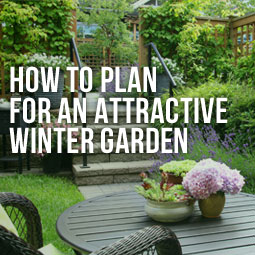 How-To-Plan-For-An-Attractive-Winter-Garden-Blog
