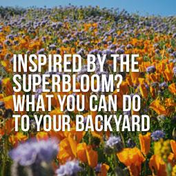 wildflowers in california field at superbloom