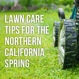 Lawn Care Tips For The Northern California Spring http://www.heavenlygreens.com/lawn-care-tips-for-the-northern-california-spring @heavenlygreens