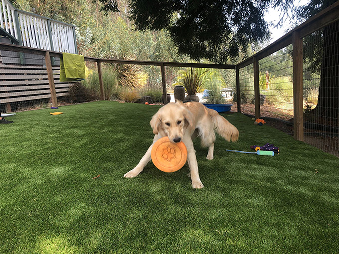 Outdoor Turf for Dogs
