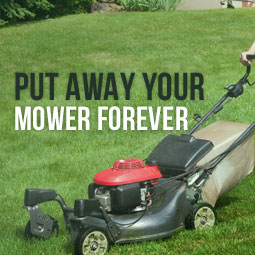 Put Away Your Mower Forever http://www.heavenlygreens.com/blog/put-away-your-mower-forever @heavenlygreens
