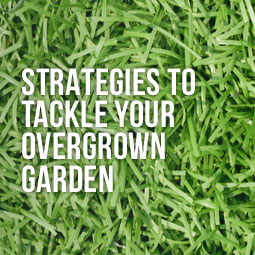 artificial grass can be a good replacement to get rid of those weeds in your garden