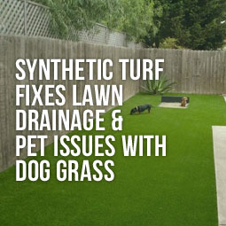 Dogs on synthetic lawn and how to fix lawn drainage and pet issues with artificial grass for dogs