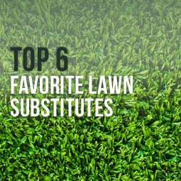 Top 6 Favorite Lawn Substitutes http://www.heavenlygreens.com/blog/top-6-favorite-lawn-substitutes @heavenlygreens