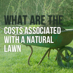 What Are The Costs Associated With A Natural Lawn http://www.heavenlygreens.com/blog/costs-associated-with-a-natural-lawn @heavenlygreens