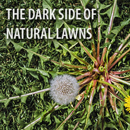 weed-growing-in-natural-grass