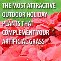 hg-holiday-plants-ag-blog