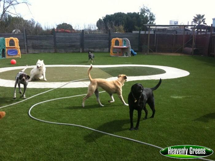 Artificial grass for dog facility