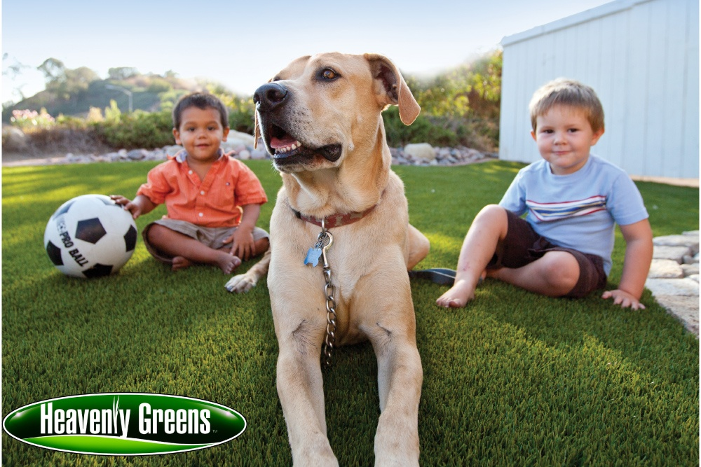 Fake Grass for Dogs