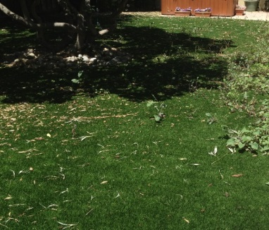 weeds-1.jpg