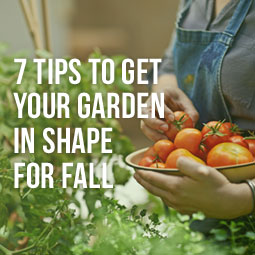 7-Tips-Garden-in-Shape-For-Fall-Blog.jpg