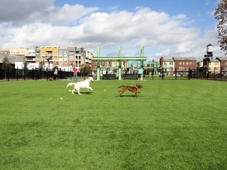Artificial Turf for dog park
