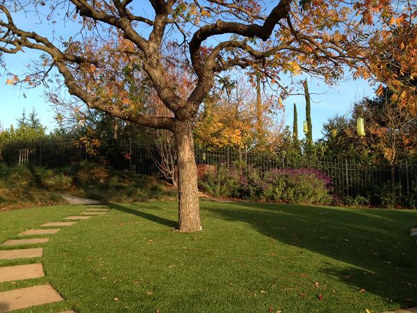 artificial turf installed in an Los Altos, california lawn