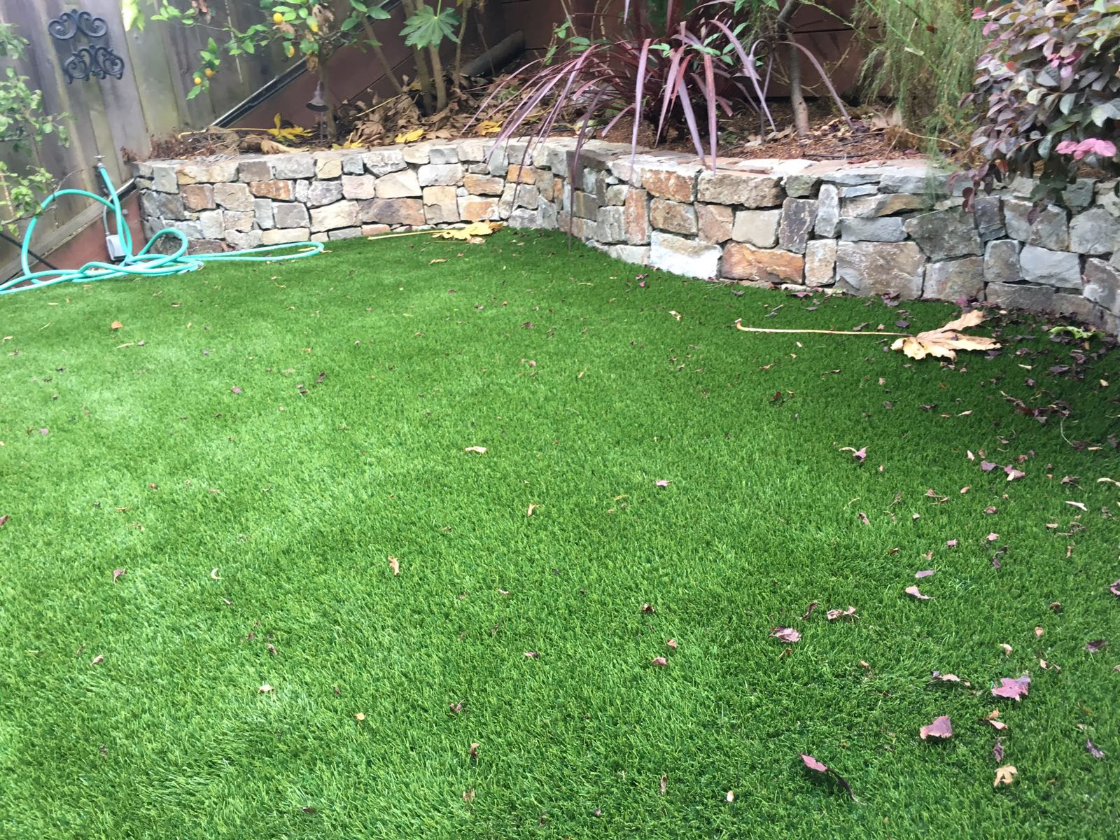 artificial turf installed in San Francisco, california lawn