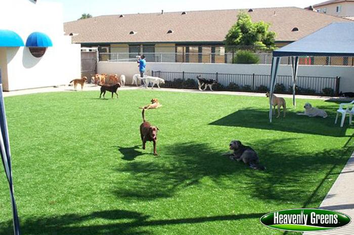 fake grass for dog parks