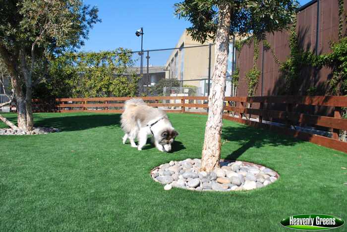 artificial turf for dogs in a facility