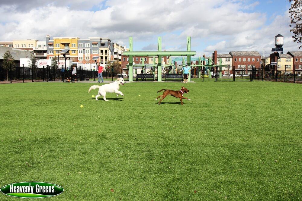dog grass